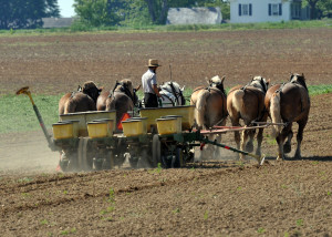 Amish working a farm in Lancaster County, PA. Image Source: freeimages.com