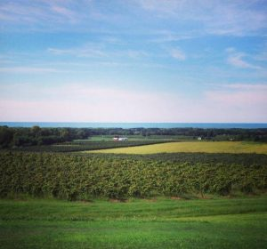 Chautauqua County is known for extensive grape acreage in the northern part of the county and numerous dairy farms in the southern part of the county. Image Source: Jason Toczydlowski, CHQ Local Foods